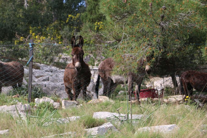 Donkey Farm Tour Croatia